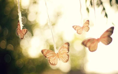 你若盛開,蝴蝶自來